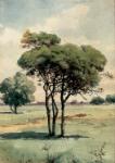 Fıstık Ağacı