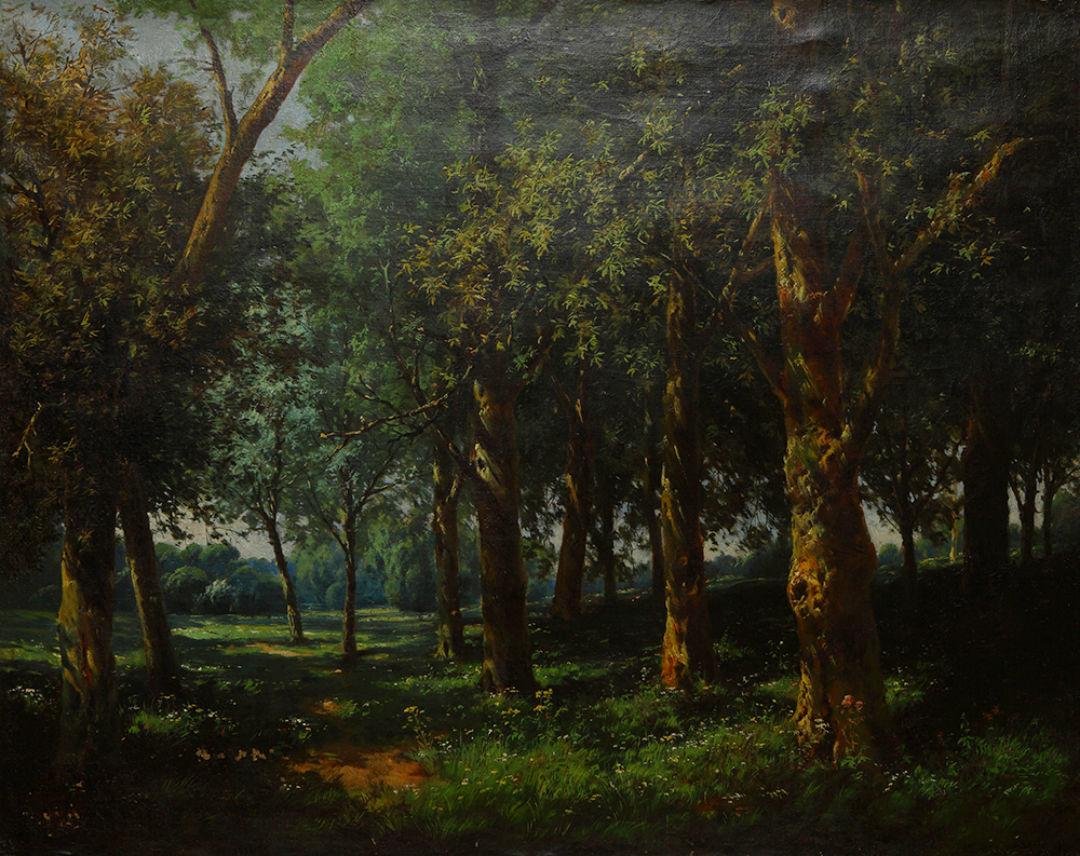 Orman Peyzaj